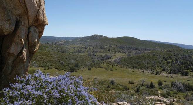 The trail gradually leaves the creek and takes you uphill among ceanothus, mountain mahogany, and scrub oak.