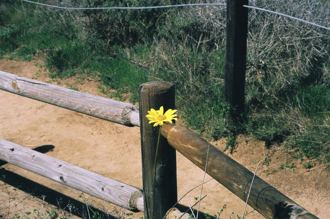 An encounter with a Spring flower on the Torrey Pines trail.