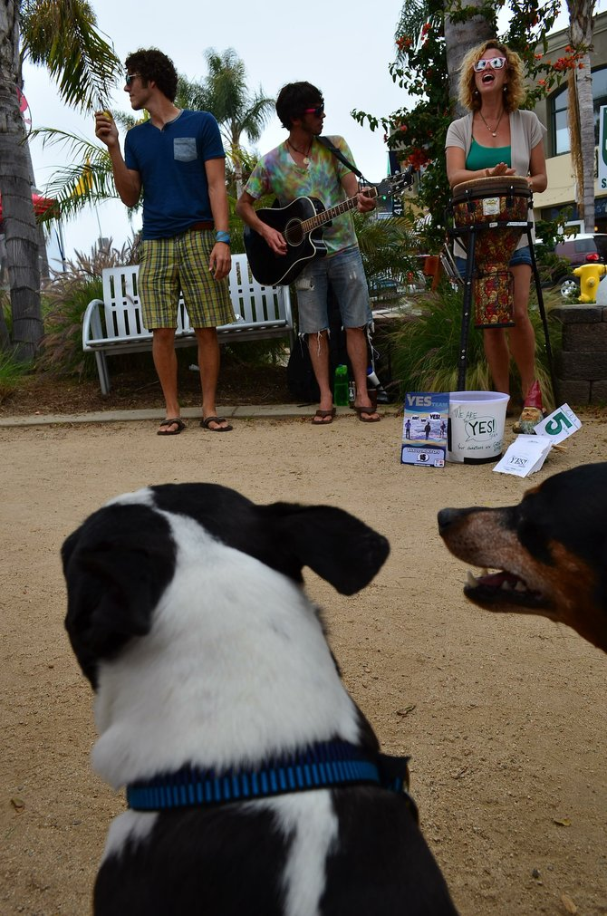 Maxwell (the Boston Terrier) and Oliver (the Min Pin) watch The Yes Team (the band) perform at Solana Beach Farmer's Market.