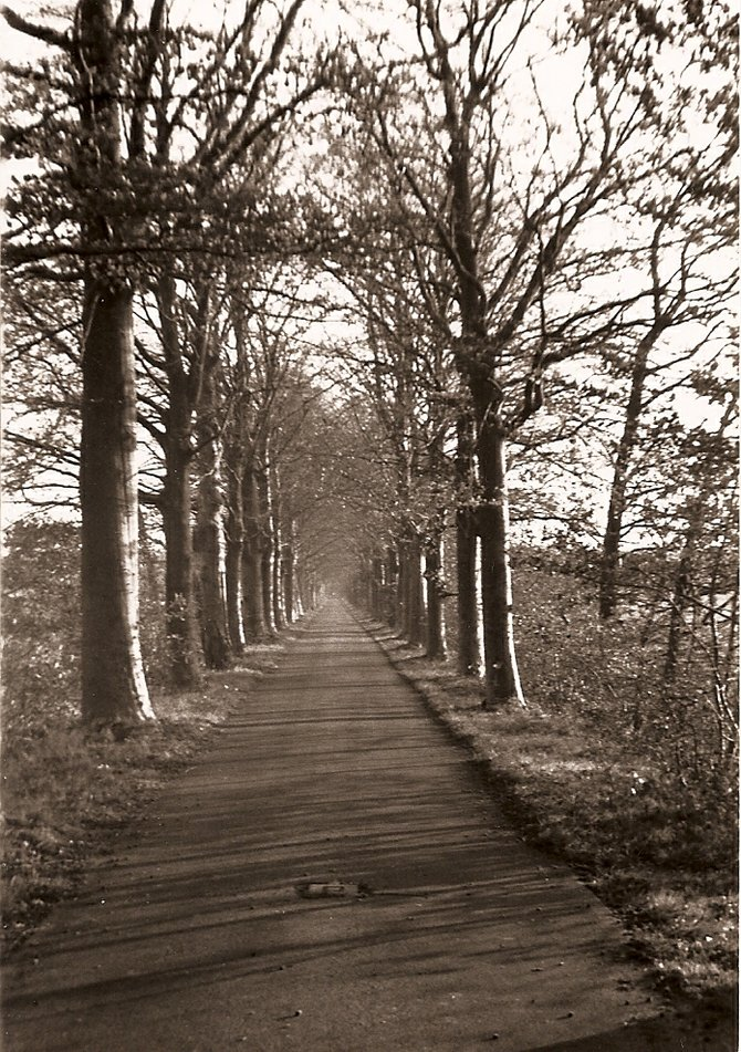 Bike Trail Near Groningen, Netherlands.  1990