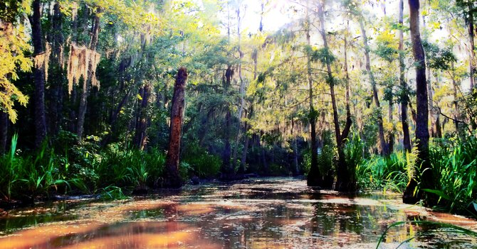 Pearl River swamp 