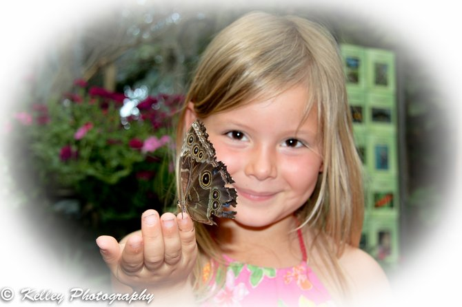 the girl with the butterfly wings - at the san diego zoo