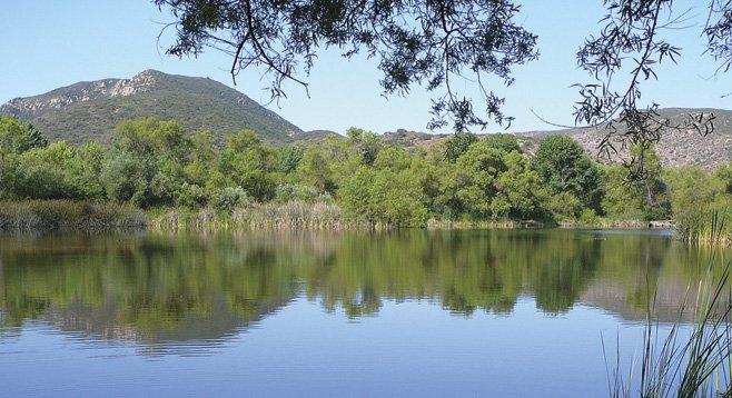 The lush vegetation around Kumeyaay Lake has created a first-class wildlife habitat.