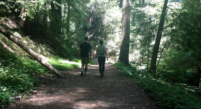 Hike through coastal redwoods in Santa Cruz, California.