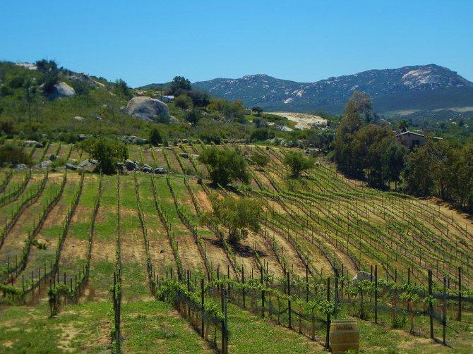 San Diego Wine Country- Milagro Farm Vineyards, Ramona