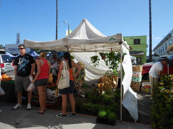 Ocean Beach Farmer's Market.