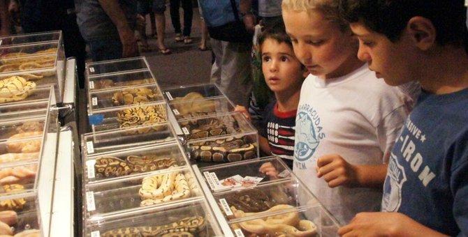 Boys enjoying the reptile show. Photo Bob Weatherston.