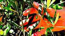 photo thumbnail