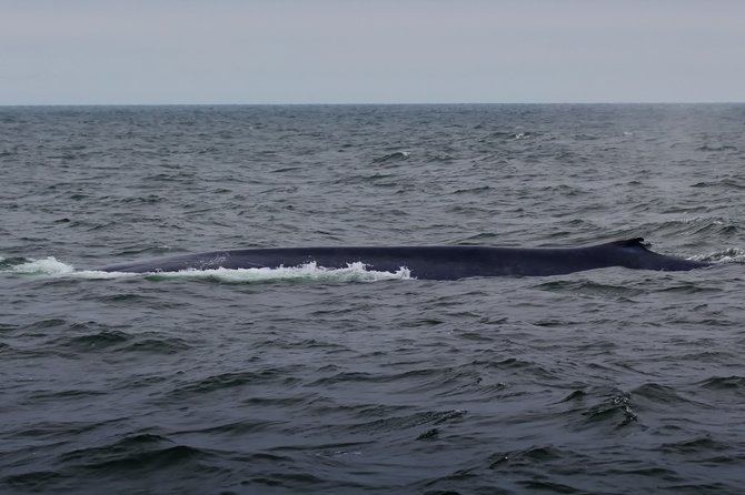 Blue Whale, taken in Santa Barbara channel 6/19/2012.  These guys are so large and fast it's like looking at a submarine.