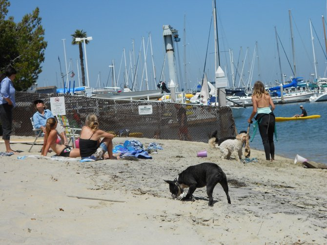 Loose dogs galore at Kellogg Beach in Pt. Loma.