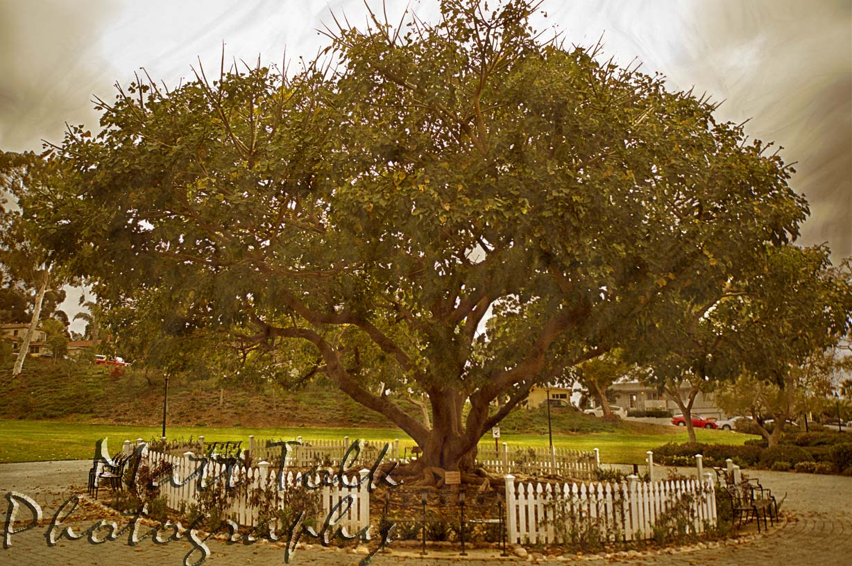 Heritage Park Tree