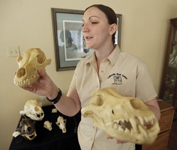 Erin Hunt, director of the California Wolf Center in Julian, shows a couple of wolf skulls.