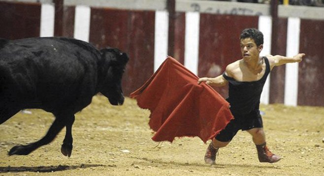 Dwarf bullfighting is becoming the world's fastest growing sport.