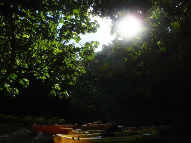 Lunch Break During River Kayaking- Kauai, HI