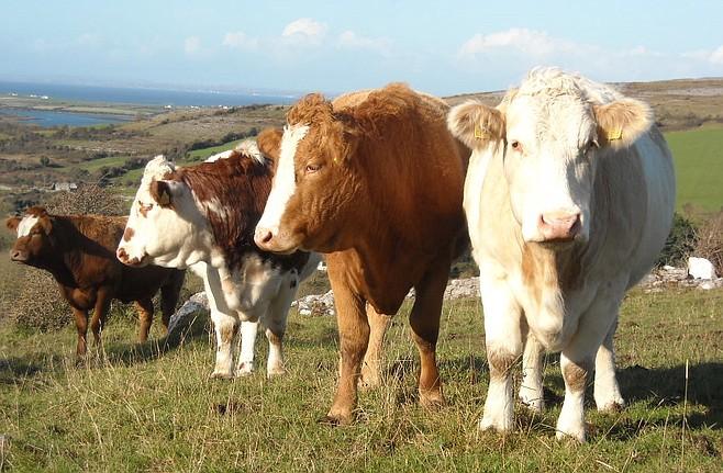 aforementioned farm animals
