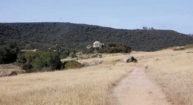 Engelmann oak loop trail in Daley Ranch.