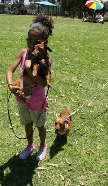 Miranda De Quesada, 8, with her doxie.  Photo: Weatherston