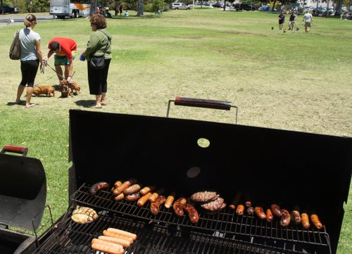 Brave weiner dogs and their humans at a Sunday picnic in Balboa Park.  Photo Bob Weatherston.