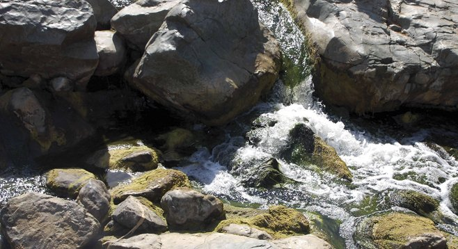 Peñasquitos Creek, which flows year round, runs through the heart of the preserve.
