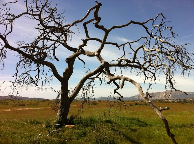 Alpine Ca Wrights Field....Lone tree