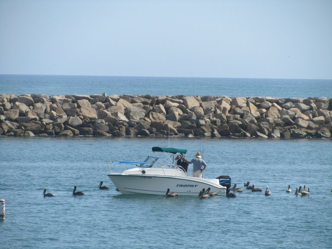 """Our Oceanside office provides Pelican Escort :) "" www.scripca.com"