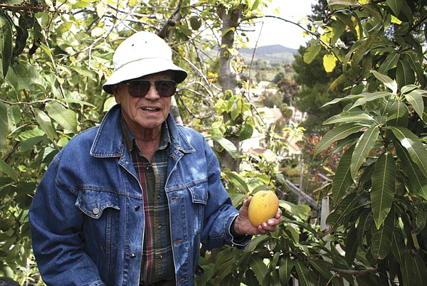 "Leo Manuel points to a mango tree, ""This one performs poorly in San Diego, but it does well in Florida."""