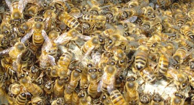 They're bees. Get it?
