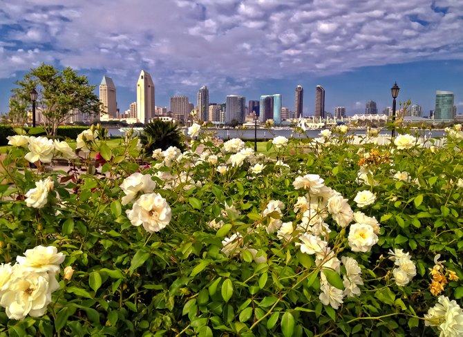 Downtown San Diego Skyline from Centennial Park, Coronado