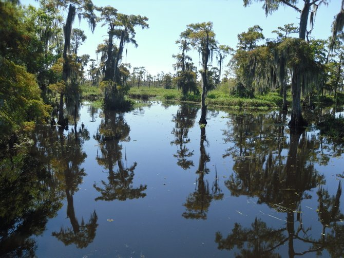 I took this pic on an air boat tour of the Louisiana Bayou's