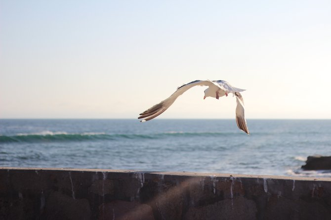 seagull taking off in Ensenada, Mexico