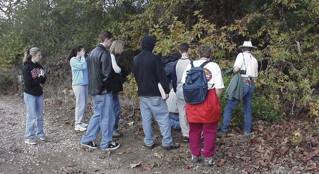 Take time to look at the broad palmate leaves of the western sycamore while hiking in San Diego's first natural park.