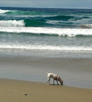 By and large, the Golden State's accessible outdoor expanses make it ideal for dog-inclusive travel.
