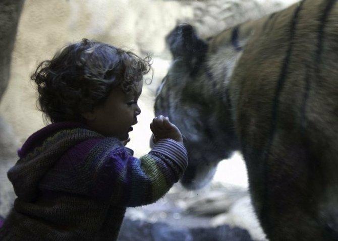 taken at the San Diego Zoo