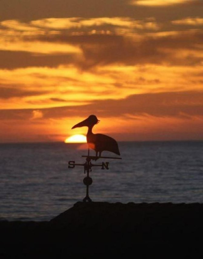 silhouette of bird/compass against backdrop of sunset near oceanside pier