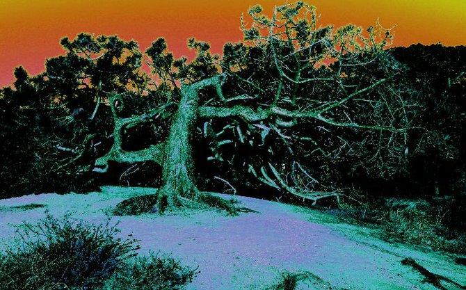 Decay. -Taken at Torrey Pines State Beach
