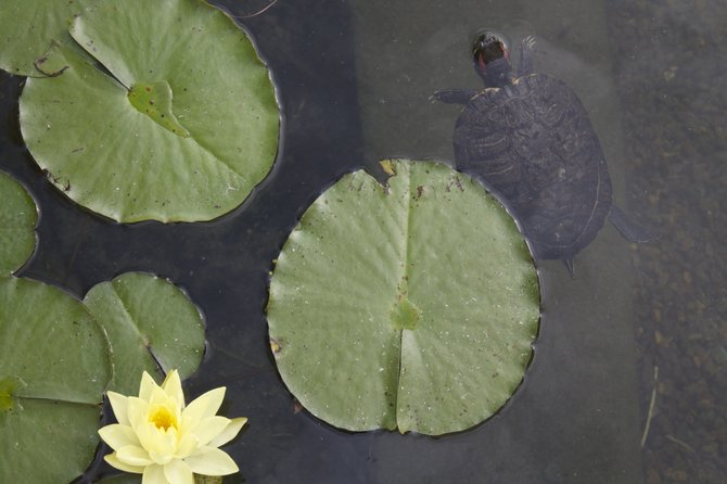 Harmony Balboa Park, Koi Pond.