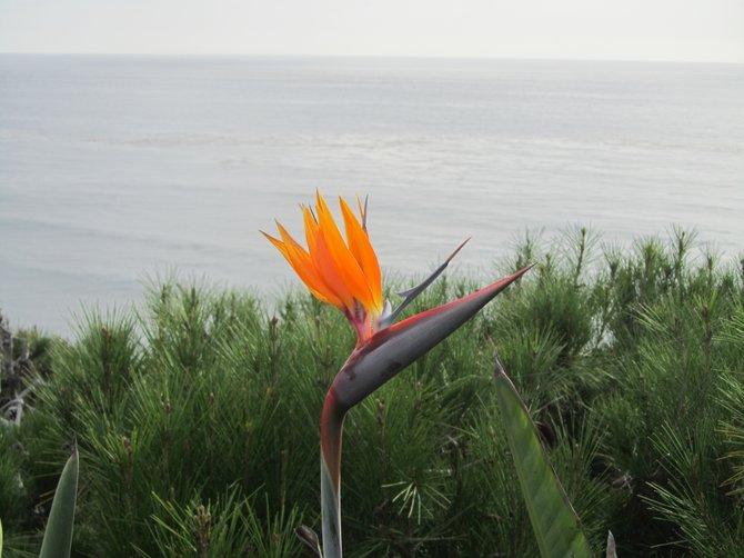 """""""Pacific Paradise"""" by: iolanda scripca Encinitas"""