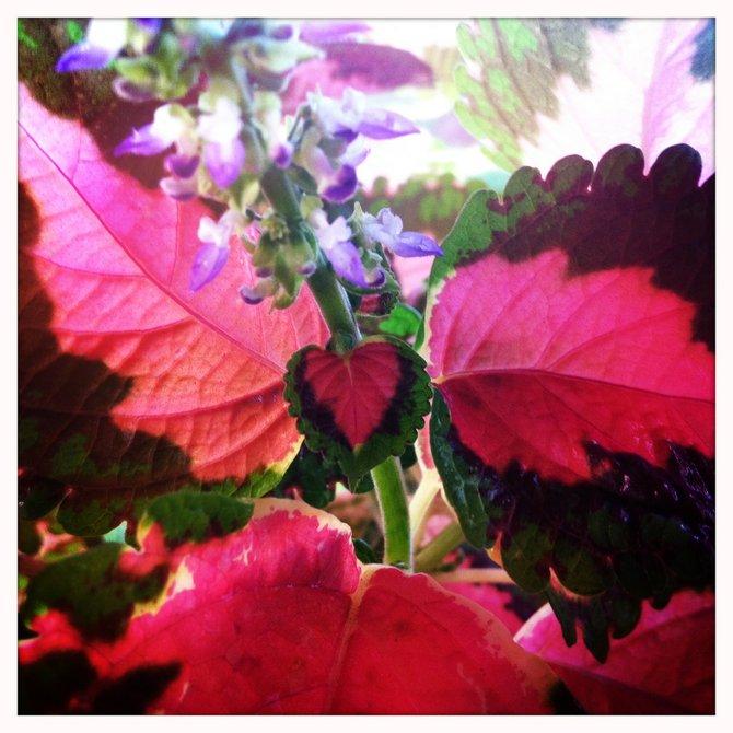 My plants little Heart