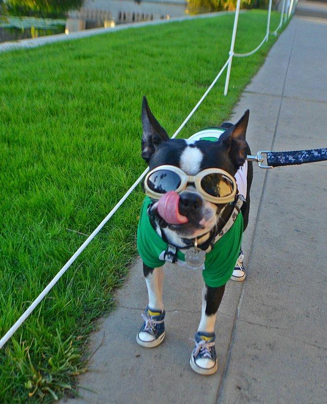Dogs of Balboa Park