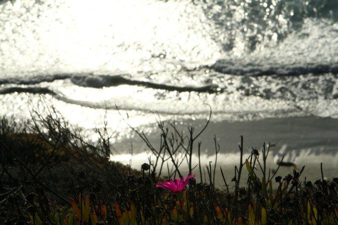 Last Flower of Summer.    Solana Beach Bluff    October 10, 2012