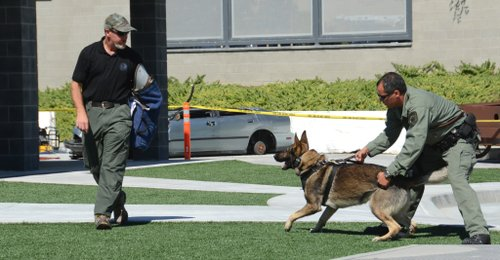 A police canine and sample bad guy.  Photo Weatherston