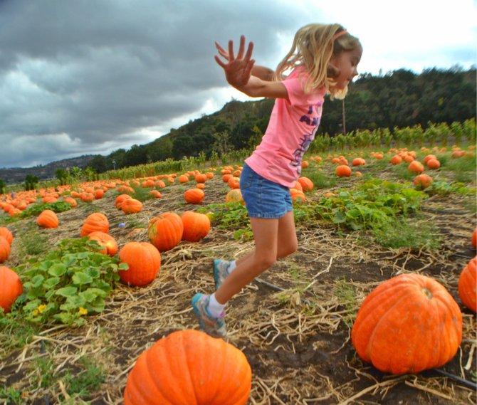 Pumpkin Jumping, Bates Nut Farm