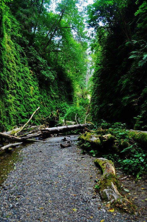 Fern Canyon Red Woods CA