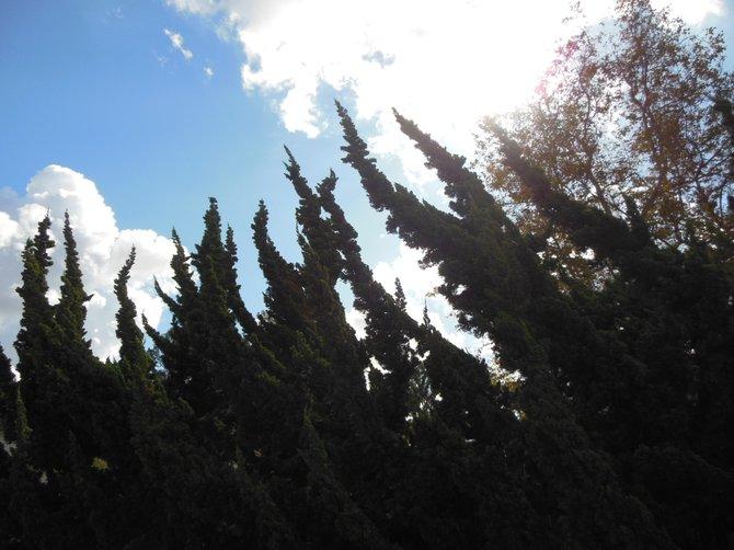 Trees Toward the Sky