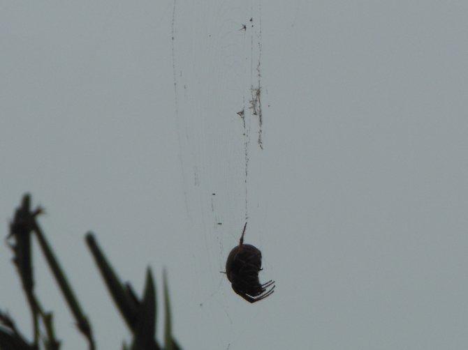 Hanging Around (Bonita)