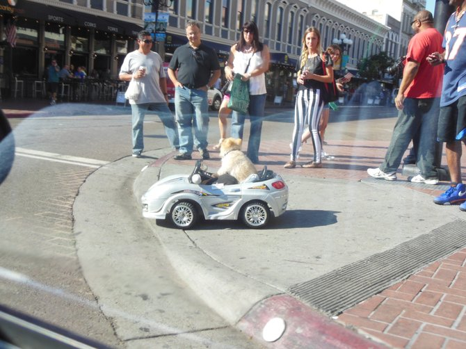 Dog in a Remote Control Car Waiting for the Light to Change (Downtown San Diego)