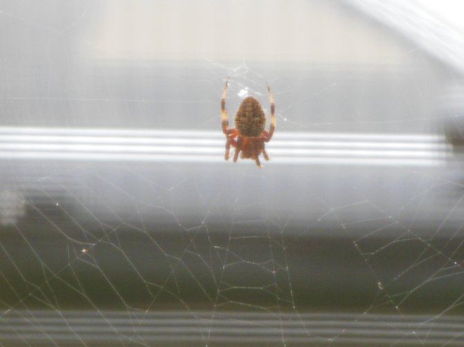 spider from my window