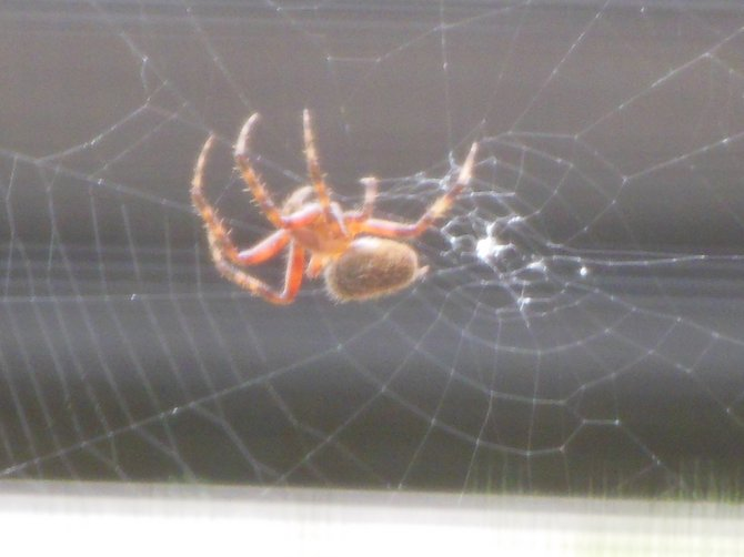 spider from my window at a third glance (Bonita)
