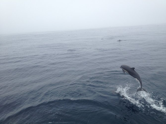 Dolphin siting on San Diego Whale Watch Tour