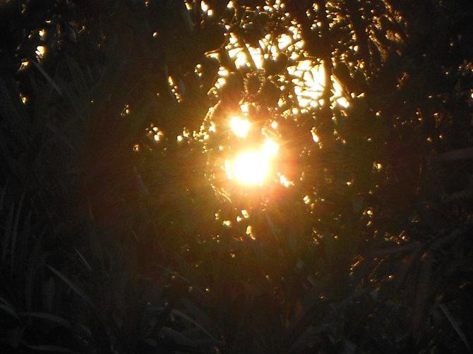 Sunset's Peephole (Bonita)